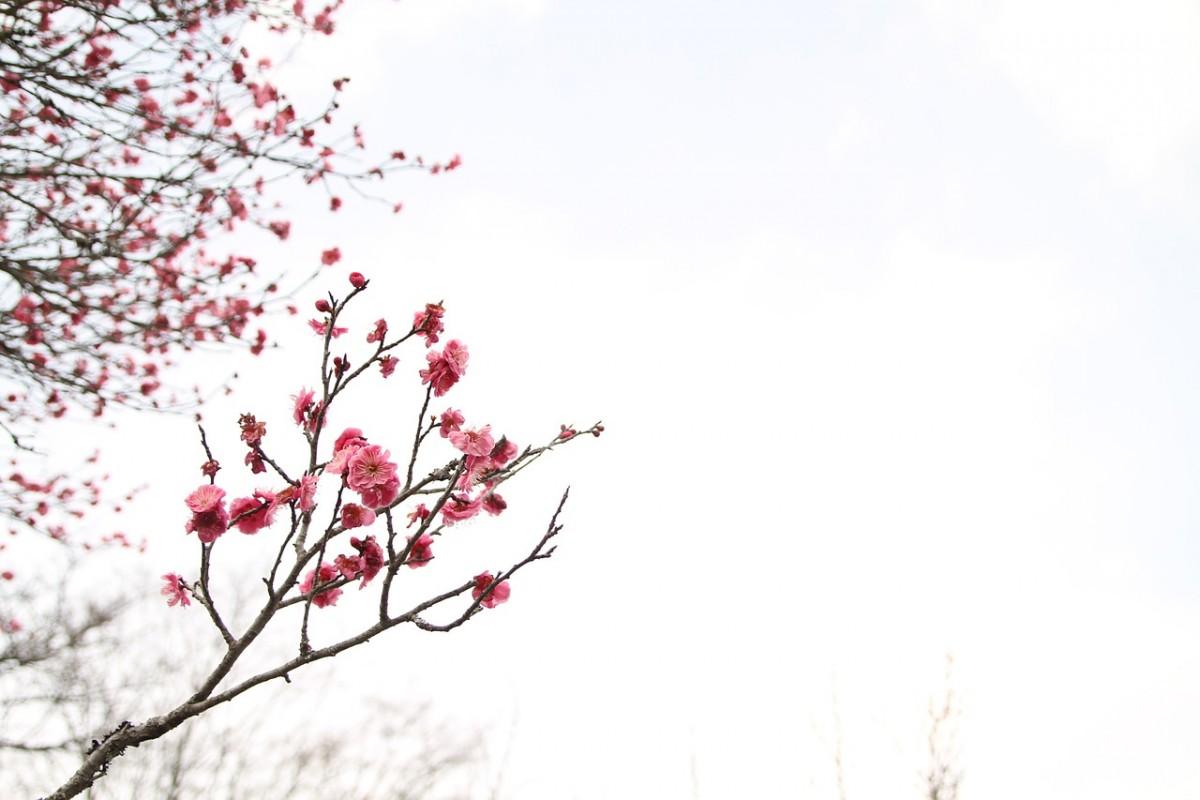 Ryddemagi hjelper deg å skape harmoni i hjemmet ditt